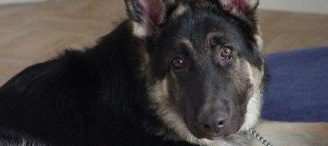 Un chien sauve son maître d'un indendie mais meurt dans les flammes | J'écris mon premier roman | Scoop.it