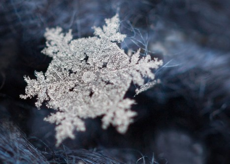 How to photograph snowflakes with a macro lens | iPhoneography-Today | Scoop.it