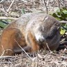 Fauna Free Pics - Public Domain - Photos gratuites d'animaux