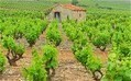Where can I find a villa in wine country France? | Vitabella Wine Daily Gossip | Scoop.it