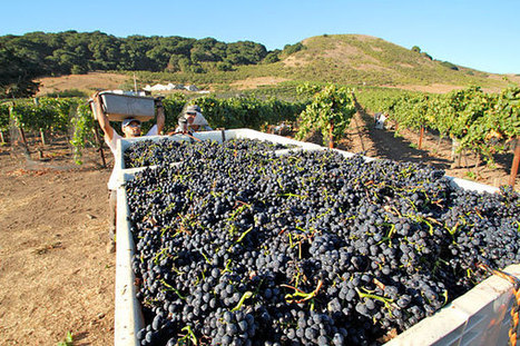 Napa forum MW asks 'is wine still cool?'   Southern California Wine and Craft Spirits Journal   Scoop.it