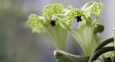 L'abeille, la mouche et la fleur… | EntomoScience | Scoop.it