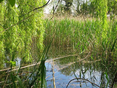 La Nature en ville : exemple du Sentier Oublié   Les colocs du jardin   Scoop.it