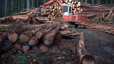 Softwood lumber hostilities resume as U.S. group files complaint | Timberland Investment | Scoop.it