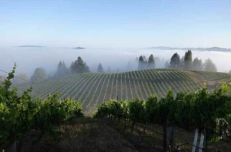 Finding California wine balance | Vitabella Wine Daily Gossip | Scoop.it