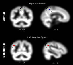 Brain Structure Shows Affinity With Numbers | Neuroscienze | Scoop.it