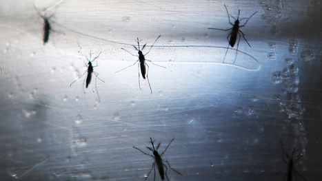 How An Electric Shock Could One Day Protect You From Zika   Zika Virus News   Scoop.it