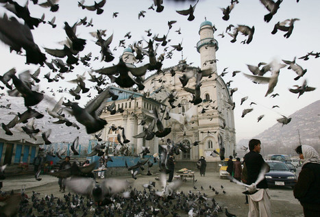 Pigeons fly outside Shah-e-Doshamshera's mosque in... | Photojournalism reporting | Scoop.it