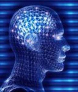 D'où vient l'intelligence humaine? | Fonctionnement du cerveau & états de conscience avancés | Scoop.it