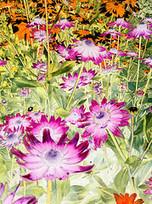 1001in365: Flower Garden - image 340   Learning, Teaching & Leading Today   Scoop.it