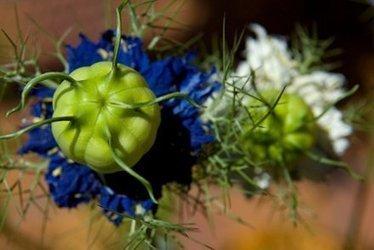 Allergies alimentaires : Nestlé veut breveter une plante médicinale | Questions de développement ... | Scoop.it