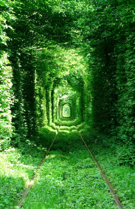 Tunnel of Love in Kleven, Ukraine | Amusing Planet | scooping the world | Scoop.it