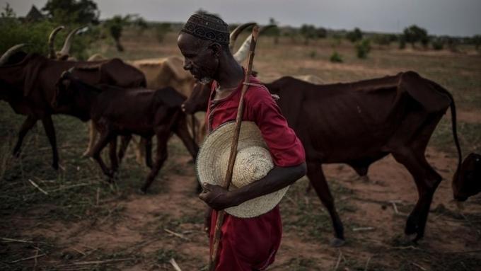 Afrique: Avenir Agriculture et système alimentaire dans un contexte post-Covid-19