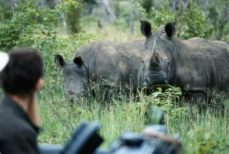 Conservation Controversy: Hunting Black Rhinos To Save Them - RedOrbit | Help save our Rhinos | Scoop.it
