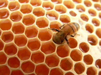 Beekeeping 101: Getting Started Part 1—The Bees | Bees and Honey | Scoop.it