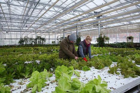 Germany - The Economics of Aquaponic Farming | Aquaponics in Action | Scoop.it