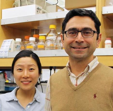 TSRI-led team finds long-sought protein sensor for the 'sixth sense' -- proprioception | Scientific Discovery | Scoop.it