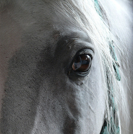 USDA Approves Study on BIVI Vetera® Vaccine Safety for Broodmare Use   The Jurga Report   The Jurga Report: Horse Health, Welfare, and Care   Scoop.it