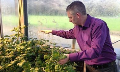 GM potato research raises hope, history and controversy in Ireland | Climate Change + Food | Scoop.it