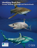 New guide: Identifying Shark Fins: Oceanic Whitetip, Porbeagle and Hammerheads | scubadiving | Scoop.it