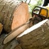 J & S Tree Services