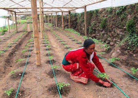 Among Nepal's hill farmers, climate adaptation pursues profit not charity | Anthropology and Climate Change | Scoop.it
