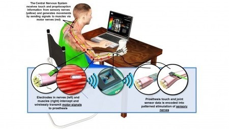 New DARPA program to develop prosthetics with lifelike sensory feedback | Slash's Science & Technology Scoop | Scoop.it