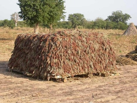 Burkina : Bientôt une banque agricole | Chronique d'un pays où il ne se passe rien... ou presque ! | Scoop.it
