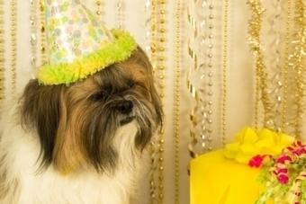 Five Unique Dog Birthday Gift Ideas | Pets | Scoop.it