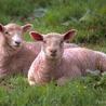 clonage et bioéthique