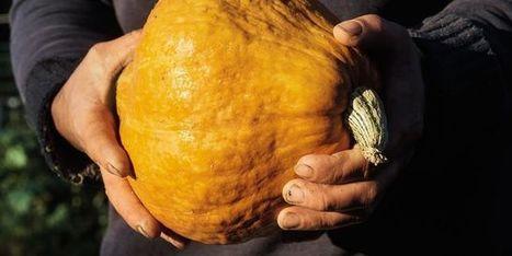 Le règnede la gastronomie végétale   Curiosités planétaires   Scoop.it