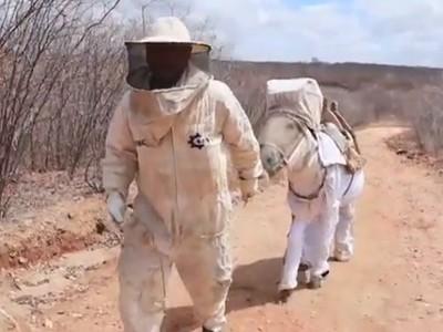 Beekeeping Donkey is a Honey Farmer's Best Friend   The Barley Mow   Scoop.it