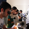 Advances in Developmental Biology and Neuroscience