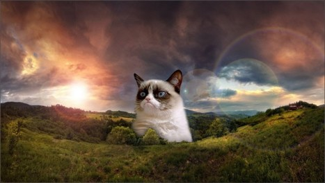 The Future is Here and it is Grumpy: The Monetization of Memes by Caitlin Burns | The Curious World | Scoop.it