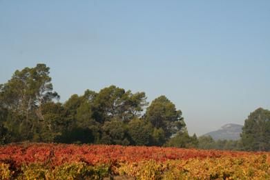 Correns, le premier village bio de France   Sustainable agriculture   Scoop.it