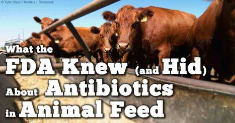Why Did FDA Ignore the Risks from Antibiotic Use? | Let the EARTH provide! | Scoop.it
