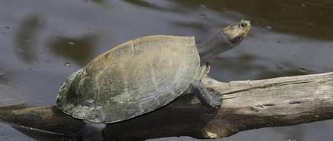 Les tortues nous donnent des leçons | The Blog's Revue by OlivierSC | Scoop.it