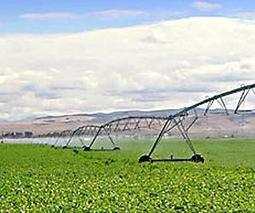 Sensors allow for efficient irrigation, give growers more control over plant growth | Environmental Sensors | Scoop.it