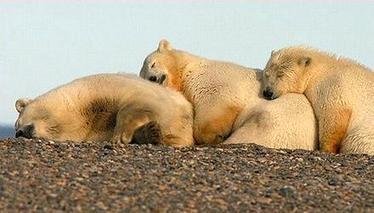 Obama WouldWidenWilderness inArctic National Wildlife Refuge | conservation & antipoaching | Scoop.it