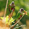 Wildlife Conservation and Biodiversity