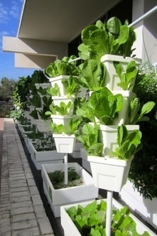 Café Bon Appetit freshens-up with new hydroponic garden | Vertical Farm - Food Factory | Scoop.it
