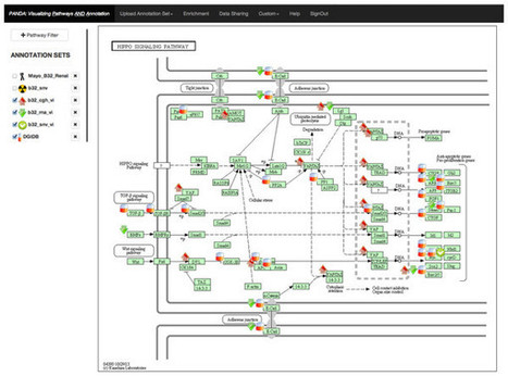 PANDA: pathway and annotation explorer for visualizing and interpreting gene-centric data | Databases & Softwares | Scoop.it