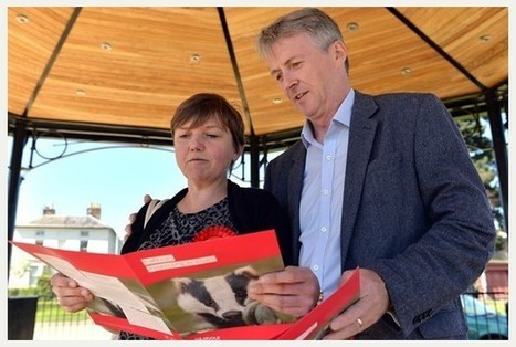 Shadow farming minister slams badger cull during visit to Gloucester | Bovine TB, badgers and cattle | Scoop.it