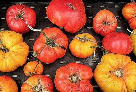 Mouthwateringly Market Fresh: Cooking With Heirloom Tomatoes | Food and Nutrition | Scoop.it