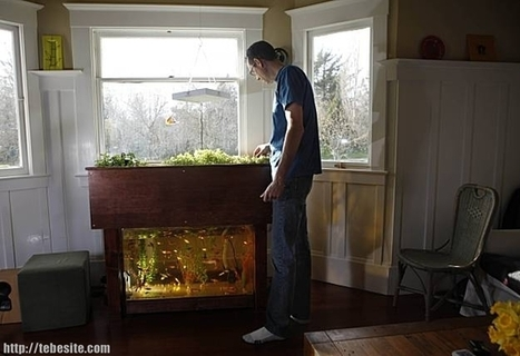 Tebesite – Aquaponics In Home - Find Your Lifestyle Here | Aquaponics for Aquarists | Scoop.it