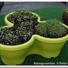 Planten en eten