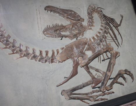 Near perfection with Gorgosaurus | Science is Cool! | Scoop.it