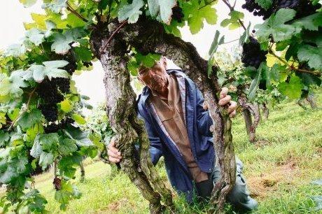 Sarragachies (32) : une parcelle de vigne classée monument historique | BenWino | Scoop.it