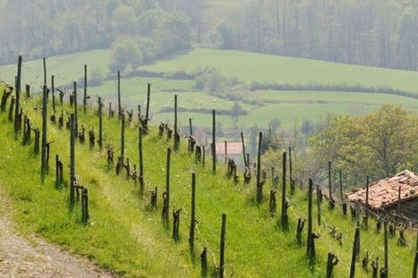 L'intrigant vignoble basque | Route des vins | Scoop.it