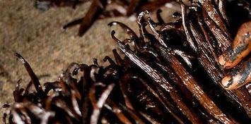 Häagen-Dazs, General Mills Promote Sustainable Vanilla Farming in Madagascar   Sustainable Brands   Sustainable Procurement News   Scoop.it